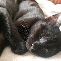 Adopt A Pet :: Hercules 2 - Bulverde, TX