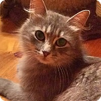 Adopt A Pet :: Hollywood - McDonough, GA