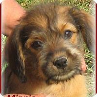 Adopt A Pet :: Minnie-ADOPTION PENDING - Marlborough, MA