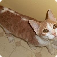 Adopt A Pet :: Kobi - Chattanooga, TN