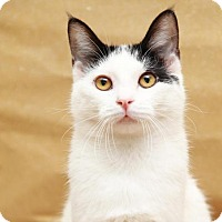 Adopt A Pet :: Sutton - Sterling Heights, MI