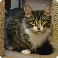 Adopt A Pet :: Myrtle - Waxhaw, NC