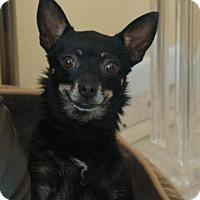 Adopt A Pet :: Mia - Martinez, GA