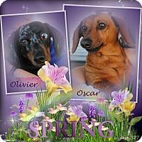 Adopt A Pet :: Olivier - Crowley, LA
