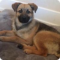 Adopt A Pet :: Callie - Saskatoon, SK