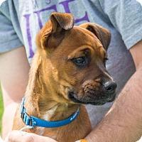 Adopt A Pet :: Shaggy $250 - Seneca, SC