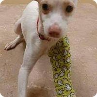 Adopt A Pet :: Speedy - Elyria, OH