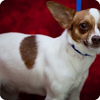 Adopt A Pet :: Trixie - Erwin, TN