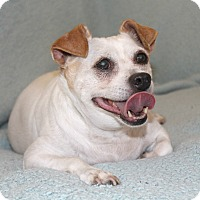 Adopt A Pet :: Greg - I have a video - Temecula, CA
