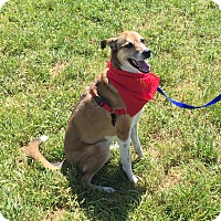 Adopt A Pet :: Ruby - San Francisco, CA