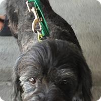 Adopt A Pet :: Chloe - Loudonville, NY