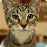 Adopt A Pet :: Raindrop - Potomac, MD