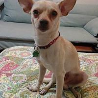 Adopt A Pet :: Rocko B. - Fort Lauderdale, FL