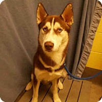 Adopt A Pet :: CANELA - Upper Marlboro, MD