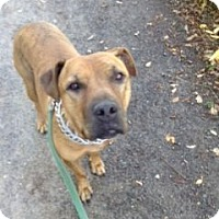 Adopt A Pet :: Brock - Cedaredge, CO