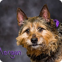 Adopt A Pet :: Morgan - Somerset, PA