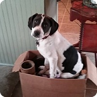 Adopt A Pet :: Toto - oxford, NJ
