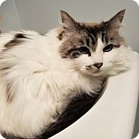 Adopt A Pet :: Winnie - Seattle, WA