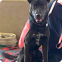 Adopt A Pet :: Maxine - Scottsdale, AZ