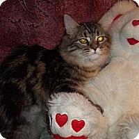 Adopt A Pet :: Thaddeus - Acme, PA