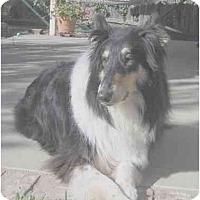 Adopt A Pet :: Lacy - Gardena, CA