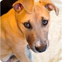 Adopt A Pet :: Luke - Rowlett, TX