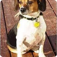 Adopt A Pet :: Izabel - Novi, MI