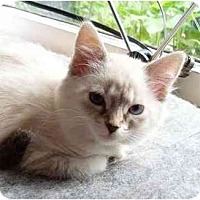 Adopt A Pet :: Colleen - Portland, OR