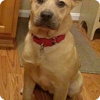 Adopt A Pet :: Claire - Winchester, VA