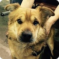 Adopt A Pet :: Henri - Meridian, ID
