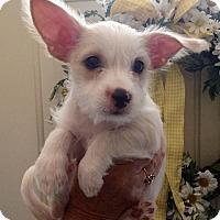 Adopt A Pet :: JAMESON - Hurricane, UT