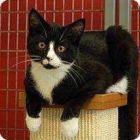 Adopt A Pet :: Carlos - Winchendon, MA