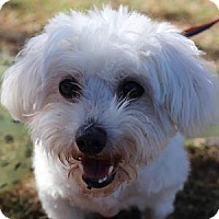 Adopt A Pet :: Kandee - La Costa, CA