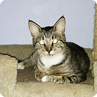 Adopt A Pet :: Valerie - Portland, OR