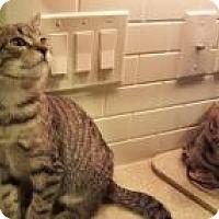Adopt A Pet :: Marion - Berkeley Hts, NJ