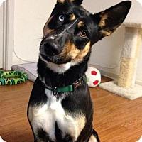 Adopt A Pet :: Taboo - Groton, MA