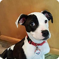 Adopt A Pet :: Annalise - Holly Springs, NC