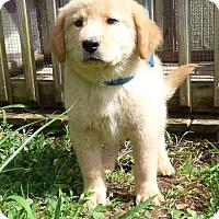 Adopt A Pet :: Deklyn - Hartford, CT