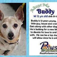Adopt A Pet :: Buddy (JRT) - Bealeton, VA