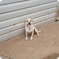 Adopt A Pet :: Dozer - Snyder, TX