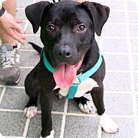 Adopt A Pet :: Frankie - Richmond, VA