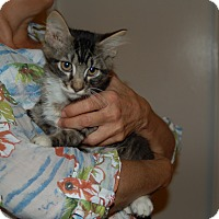 Adopt A Pet :: Hunter - Great Mills, MD