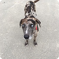 Adopt A Pet :: Zeus - Crowley, LA
