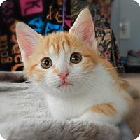 Adopt A Pet :: Elaina - Austintown, OH