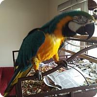 Adopt A Pet :: Rocky - Aurora, IL