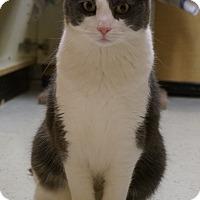 Adopt A Pet :: Verns - Salem, NH