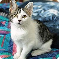 Adopt A Pet :: Maddie - Sacramento, CA