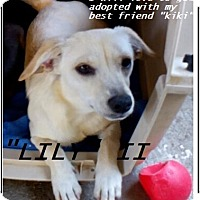 Adopt A Pet :: Lily (in adoption process) - El Cajon, CA