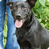 Adopt A Pet :: Captain Hook - Clarkesville, GA