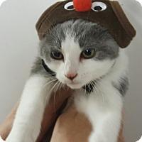 Adopt A Pet :: Rainie - Irwin, PA